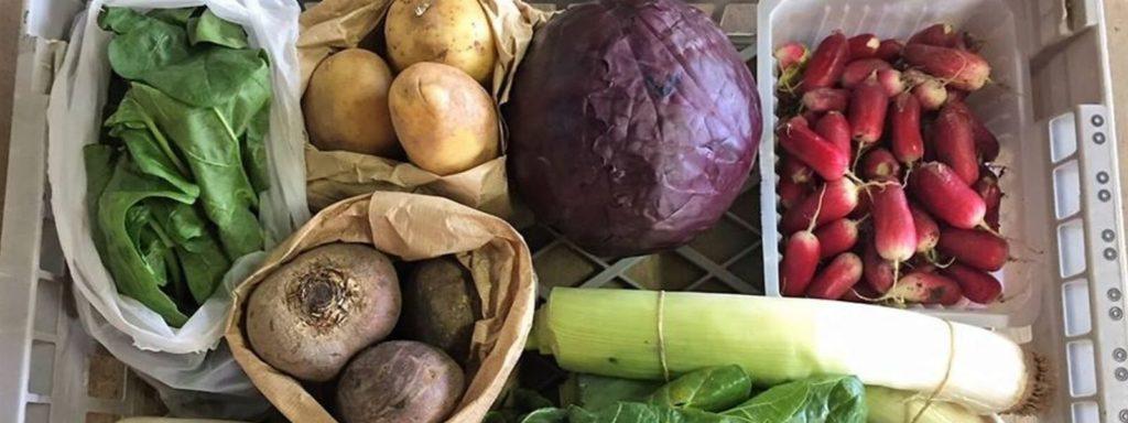 Panier de légumes hebdomadaires à Senlis avec les Jardins du Plateau Picard